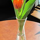 Orange Tulip by Patricia127