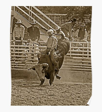 A Rodeo Cowboy Riding His Bull Poster