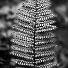 Silver Fern by Odille Esmonde-Morgan