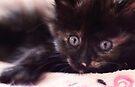 Cat's Eyes by yolanda