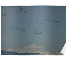Geese and Glaciers, a great combination Poster