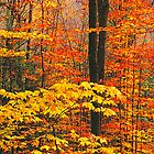 AUTUMN YELLOW by Chuck Wickham