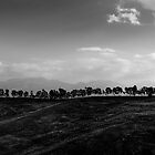 treeline, Alcamo, Sicily by Andrew Jones