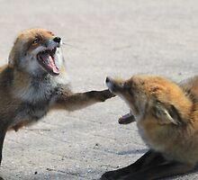 Angry Vixen by DutchLumix