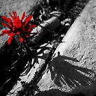 Splash of red by MissRisa