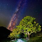 Trees in the alps under the Milky Way by Delfino