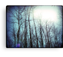 a whispered love story floating in the tops of the trees fingertips Canvas Print