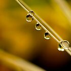 droplets in suspense by lensbaby