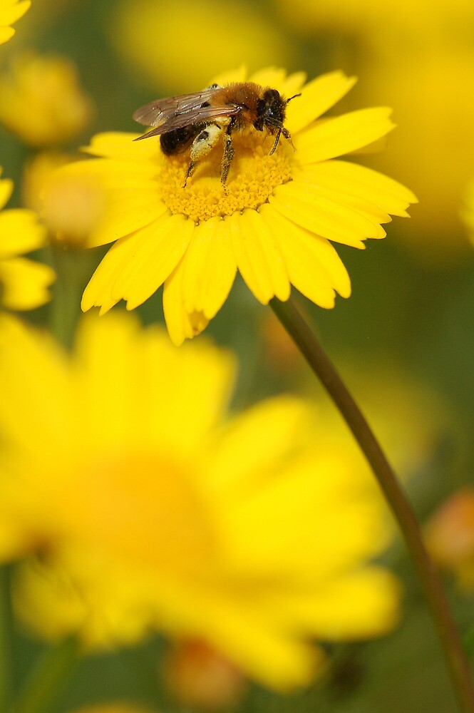 Busy Bee by César Torres