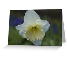 White Daffodil Greeting Card