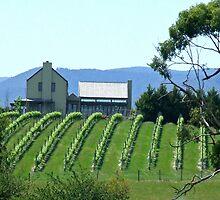 Yarra Valley Vineyard by TeaCee