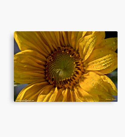 Let the Sunshine In  -  Sunflower.  by Brown Sugar. Views (168)  favorited by (3)Thanks ! Canvas Print