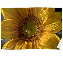 Let the Sunshine In  -  Sunflower.  by Brown Sugar. Views (168)  favorited by (3)Thanks ! Poster