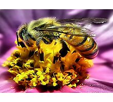Bee~utiful Photographic Print