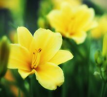 Yellow Lilies by Aaron Campbell