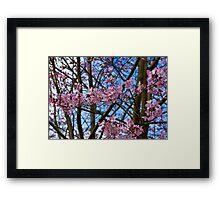 Cherry Blossom  (Spring) Framed Print