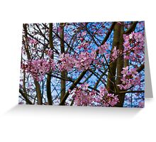 Cherry Blossom  (Spring) Greeting Card