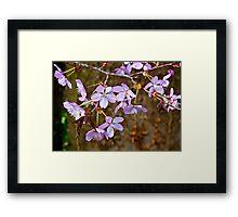 Cherry Blossom  (Spring) #2 Framed Print