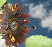 Sunflower Bee by leenicola