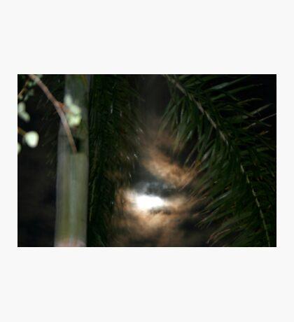 In The Dark Of Night Photographic Print