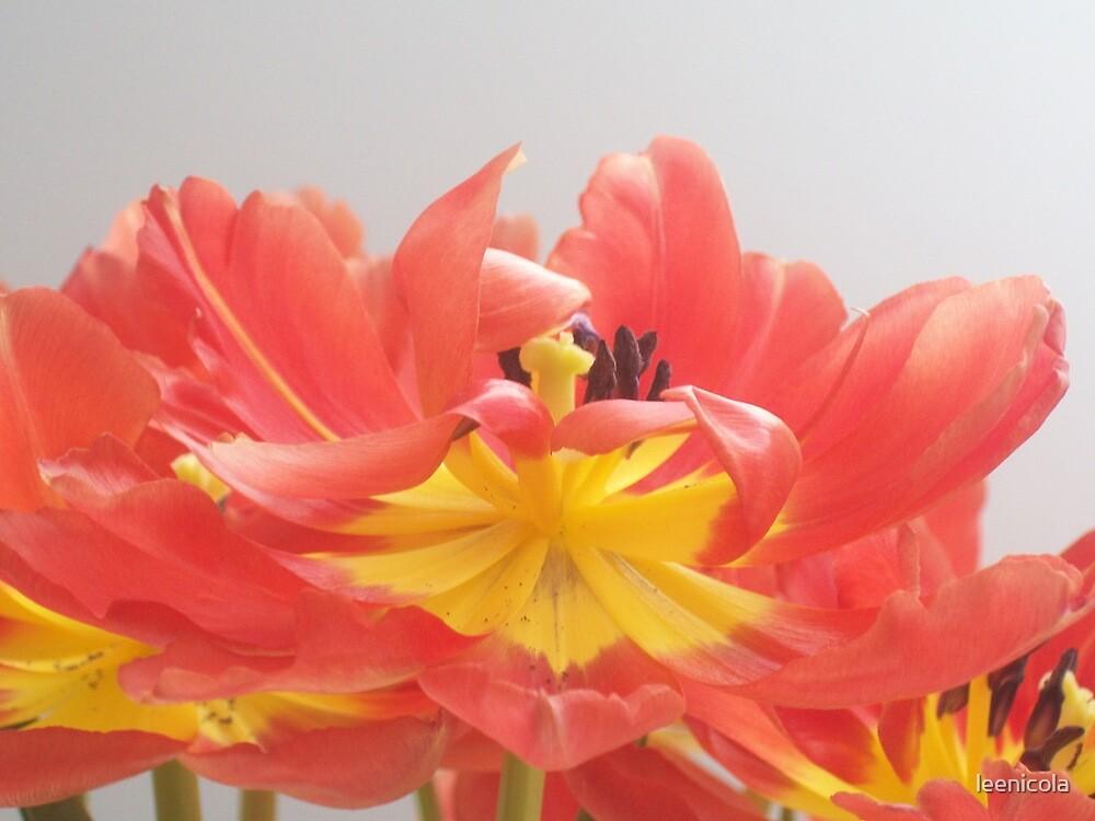 Tulips in Bloom by leenicola