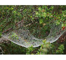 Spider Hammock Photographic Print