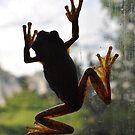 Hops' by UniSoul