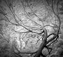 Scary Tree- Morialta Reserve by Ben Loveday