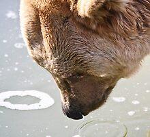 Bears Alike by thomasash