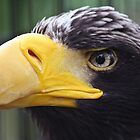 Eagle Eye by thomasash