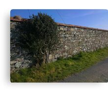 Holly. Cahore Point, Wexford Canvas Print