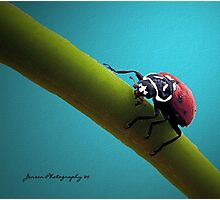 In The Spot Light  ( Ladybug Series ) Photographic Print