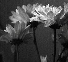 To burst into blossom  by Antanas