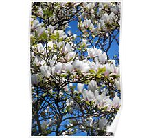 Blooming Tree Poster