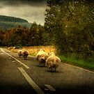 Wool on the run by bbtomas