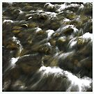 My fly fishing exciting fascination  -  Raba River - Tight lines my friends . by Brown Sugar. Views ( 204) favorited by (2) . Thanks friends ! by © Andrzej Goszcz,M.D. Ph.D