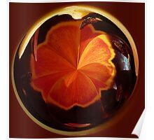 Tulip in spherical Poster