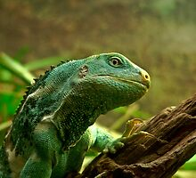 Fijian Crested Iguana by Tom Newman