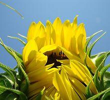 Floral art Sunflower Blue Sky Baslee Troutman by BasleeArtPrints