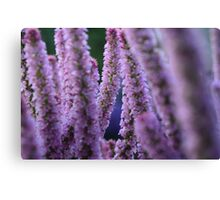 Flower Stalk Canvas Print