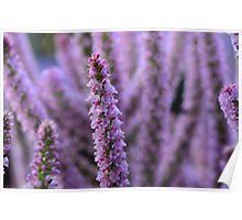 flower stalks Poster