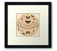 Butterfly Coordinates Framed Print