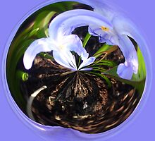 Flower bubble by Robert Gipson