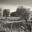 Trees and Field by Rene Hales