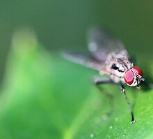 Fly - 2 of 3 by Greg Little