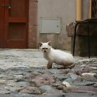 One photo then please leave! - Sardinian kitten by zoemancroft
