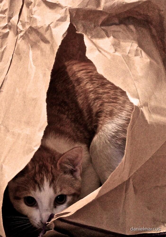 Cat in a Bag by danielmarcus