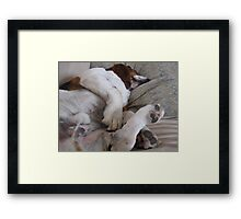 Shango sleeping Framed Print