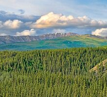 Denali National Park by KathleenRinker
