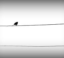 after the rain/bird on a wire by lizzybrown